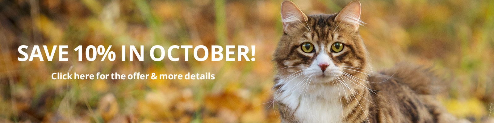 Save 10% in October!