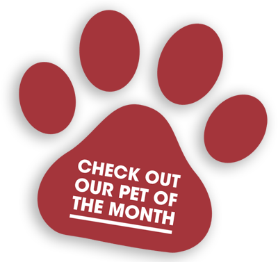 Check Out Our Pet Of The Month