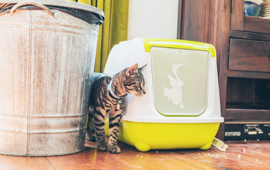 Think Outside the Litterbox