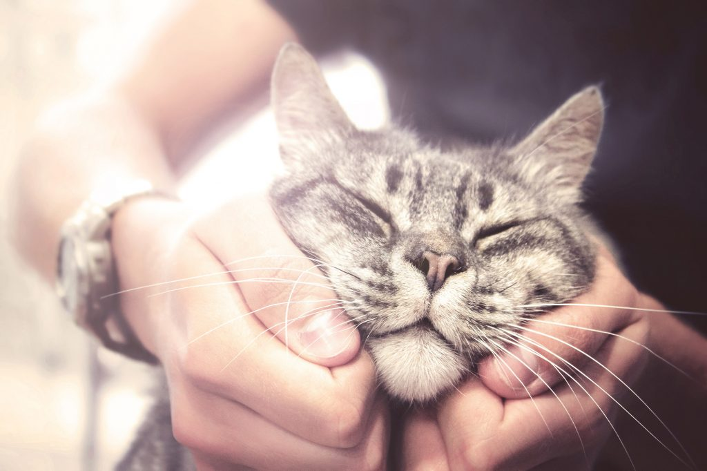 Keeping your cat Safe & Healthy