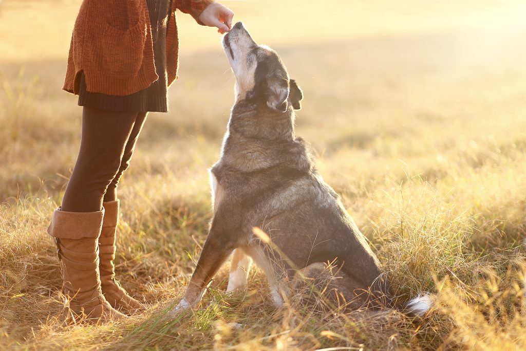 Treats can be a Valuable Source of Nutrition for your Pet