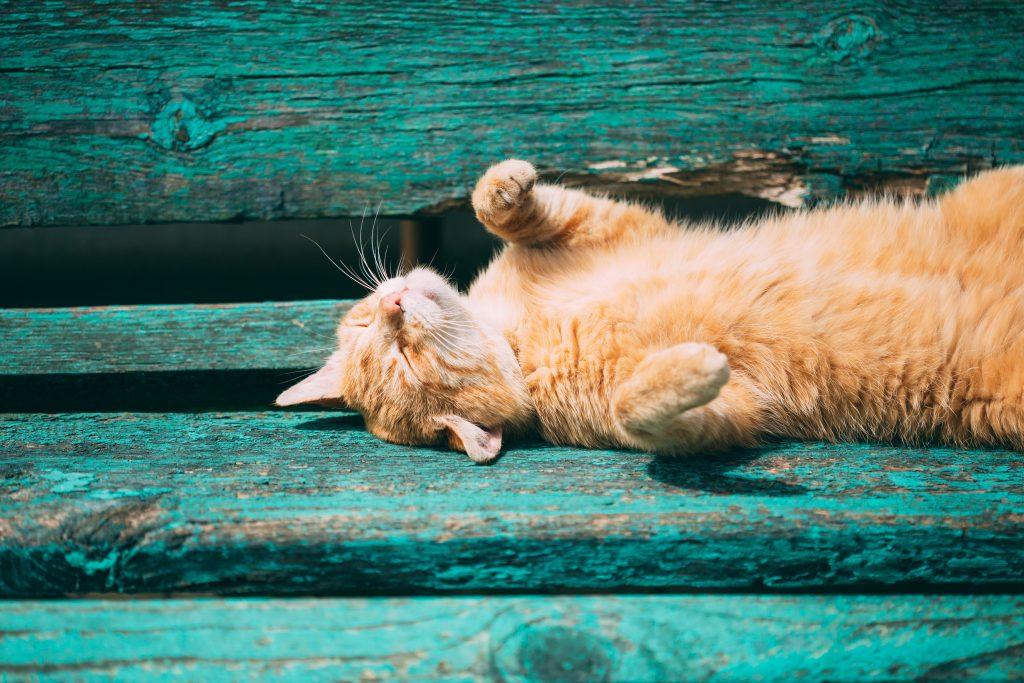 Feline Urinary Health Solutions
