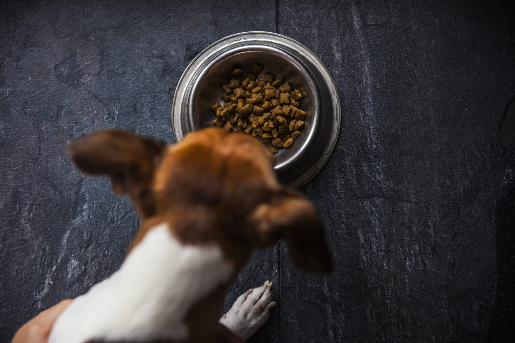 Is your dog food too rich?